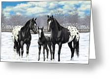 Black Appaloosa Horses In Winter Pasture Greeting Card