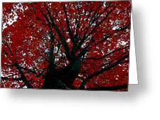 Black Bark Red Tree Greeting Card