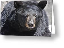 Black Bear 1 Greeting Card