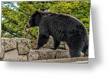Black Bear Boar Taking In The Sights Greeting Card