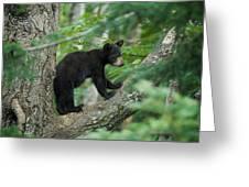 Black Bear Cub Greeting Card
