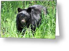 Black Bear Cub In The Grass Greeting Card