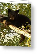 Black Bear Cub Resting On A Tree Branch Greeting Card