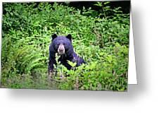 Black Bear Eating His Veggies Greeting Card
