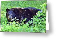 A Florida Black Bear Greeting Card