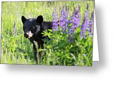Black Bear Hiding Behind Lupines Greeting Card