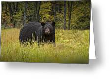 Black Bear In The Grass Greeting Card