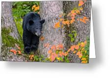 Black Bear In Tree Greeting Card