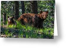 Black Bear - Mother And Baby Greeting Card