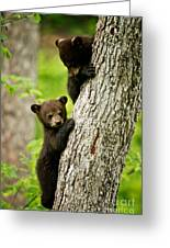 Black Bear Pictures 84 Greeting Card