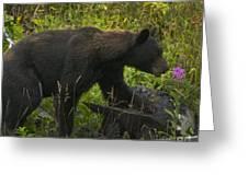 Black Bear-signed-#6549 Greeting Card