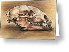 Black Bear Skull Greeting Card by Darlene Watters