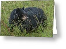 Black Bear Sow Greeting Card