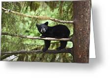 Black Bear Ursus Americanus Cub In Tree Greeting Card