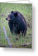 Black Bear Yellowstone Np_grk7085_05222018 Greeting Card