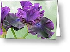 Black Bearded Iris Greeting Card
