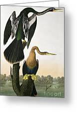 Black Billed Darter Greeting Card by John James Audubon