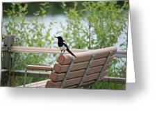 Black-billed Magpie Pica Hudsonia Greeting Card