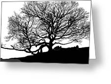 Black Birch Silhouette 2009 07 Greeting Card