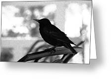 Black Bird Bw Greeting Card