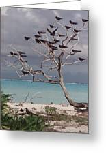 Black Birds Greeting Card