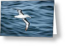 Black-browed Albatross Gliding Over Deep Blue Waves Greeting Card