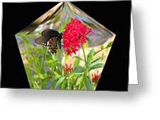 Black Butterfly In A Diamond Greeting Card
