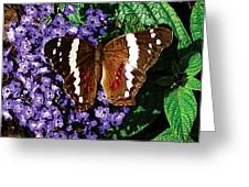 Black Butterfly On Heliotrope Greeting Card