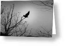 Black Buzzard 1 Greeting Card