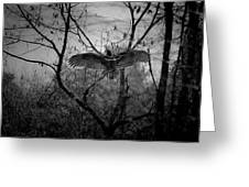 Black Buzzard 3 Greeting Card