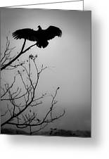 Black Buzzard 6 Greeting Card