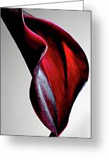 Black Calla Lily Greeting Card