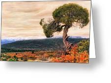 Black Canyon Juniper - Colorado - Autumn Greeting Card