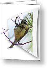 Black-capped Chick-a-dee Greeting Card