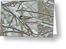 Black Capped Chickadee - Poecile Atricapillus Greeting Card