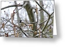 Black-capped Chickadee 20120321_39b Greeting Card