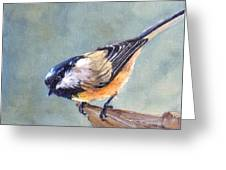 Black Capped Chickadee Greeting Card by Debra Mickelson