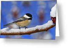 Black-capped Chickadee In Sumac Greeting Card