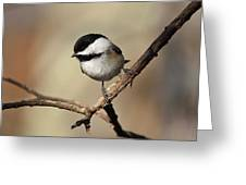 Black-capped Chickadee Portrait Greeting Card