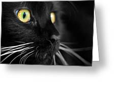 Black Cat 2 Greeting Card by Craig Incardone