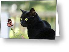 Black Cat And Butterfly Greeting Card