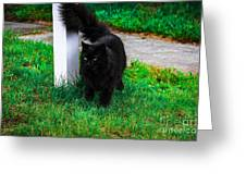 Black Cat Maine Greeting Card