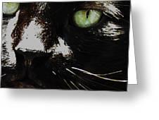 'black Cat' Greeting Card