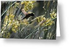 Black Chinned Hummingbird In Flight Greeting Card