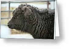Black Cow Greeting Card