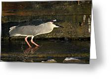 Black Crowned Knight Heron Greeting Card