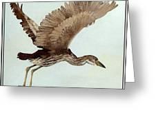 Black Crowned Night Heron 3junenile Roger Bansemer Greeting Card