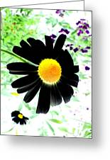 Black Daisy Greeting Card