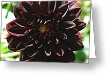 Black Dalia  Greeting Card