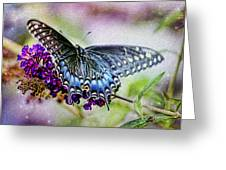 Black Eastern Swallowtail Greeting Card